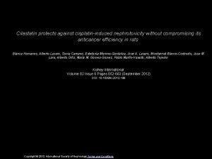Cilastatin protects against cisplatininduced nephrotoxicity without compromising its