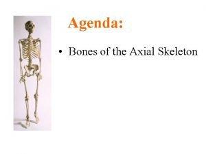 Agenda Bones of the Axial Skeleton Parts of