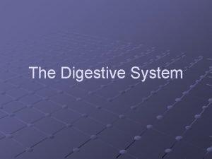 The Digestive System The Digestive System Defn Changes
