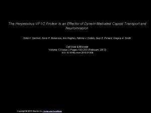 The Herpesvirus VP 12 Protein Is an Effector