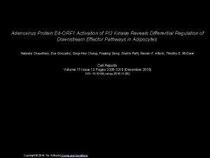 Adenovirus Protein E 4 ORF 1 Activation of