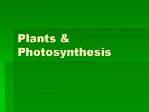 Plants Photosynthesis Plant Tissues Ground tissue Parenchyma thin
