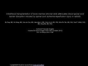 Intrathecal transplantation of bone marrow stromal cells attenuates