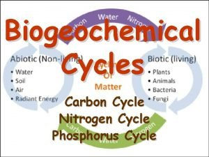 Biogeochemical Cycles Carbon Cycle Nitrogen Cycle Phosphorus Cycle