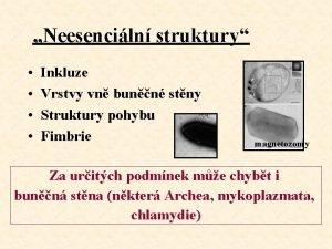 Neesenciln struktury Inkluze Vrstvy vn bunn stny Struktury