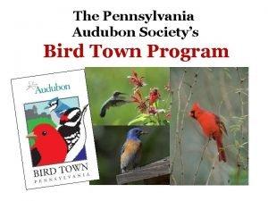 The Pennsylvania Audubon Societys Bird Town Program What