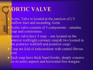 AORTIC VALVE Aortic Valve is located at the