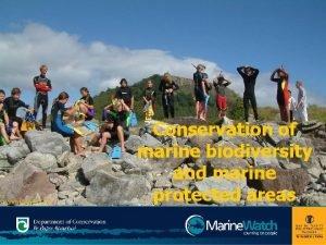 Pongakawa School Conservation of marine biodiversity and marine