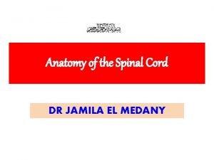 Anatomy of the Spinal Cord DR JAMILA EL