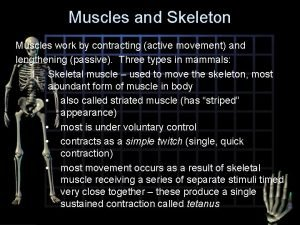 Muscles and Skeleton Muscles work by contracting active
