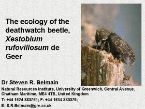 The ecology of the deathwatch beetle Xestobium rufovillosum