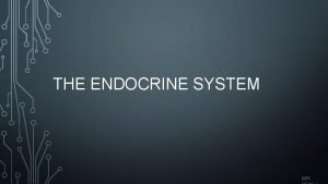 THE ENDOCRINE SYSTEM MR ENDOCRINE SYSTEM Function To