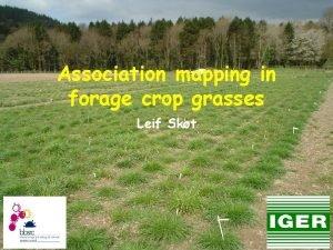 Association mapping in forage crop grasses Leif Skt