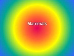 Mammals Unit Map Set up Unit Name Mammals
