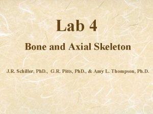 Lab 4 Bone and Axial Skeleton J R