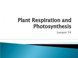 Plant Respiration and Photosynthesis Lesson 14 Plant Respiration
