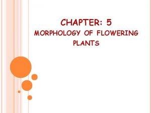 CHAPTER 5 MORPHOLOGY OF FLOWERING PLANTS MORPHOLOGY Deals