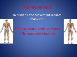 The Movement In humans the Movement realizes thanks