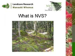 What is NVS 77 000 Relevs 19 000