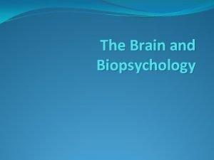 The Brain and Biopsychology The Brain Basics Size