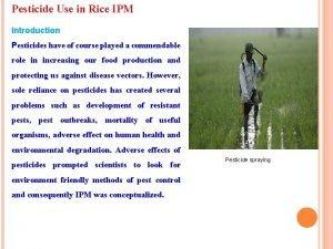 Pesticide Use in Rice IPM Introduction Pesticides have