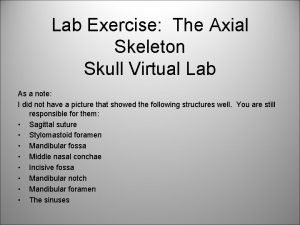 Lab Exercise The Axial Skeleton Skull Virtual Lab