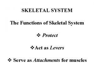 SKELETAL SYSTEM The Functions of Skeletal System v