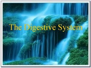The Digestive System Exocrine glandwith duct Constituents of