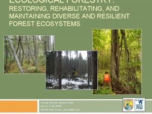 ECOLOGICAL FORESTRY RESTORING REHABILITATING AND MAINTAINING DIVERSE AND
