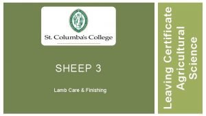 Lamb Care Finishing Leaving Certificate Agricultural Science SHEEP
