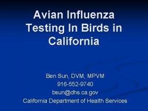 Avian Influenza Testing In Birds in California Ben