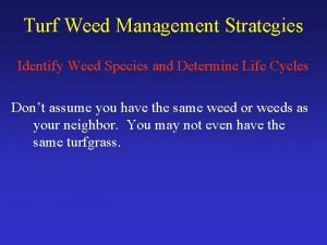 Turf Weed Management Strategies Identify Weed Species and