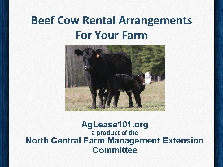 Beef Cow Rental Arrangements For Your Farm Ag