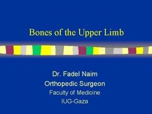 Bones of the Upper Limb Dr Fadel Naim