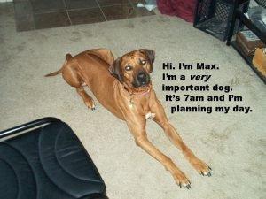 Hi Im Max Im a very important dog