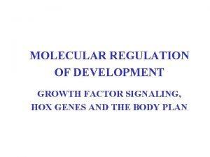 MOLECULAR REGULATION OF DEVELOPMENT GROWTH FACTOR SIGNALING HOX