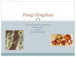 Fungi Kingdom MYSTERIOUS MOLDS MILDEWS YEAST MUSHROOMS Fungi