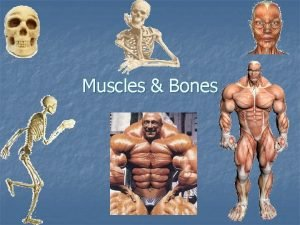 Muscles Bones Muscles n a tissue composed of