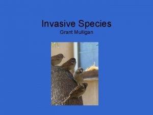 Invasive Species Grant Mulligan Outline Invasive Birds Invasive
