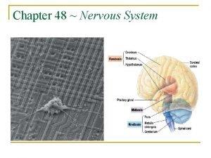 Chapter 48 Nervous System The Nervous System http