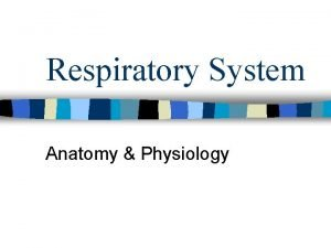 Respiratory System Anatomy Physiology Function and Functional Anatomy