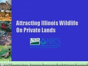 Attracting Illinois Wildlife On Private Lands Attracting Illinois