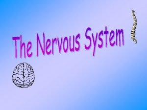 Composition of Nervous System The Nervous System contains