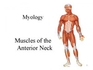 Myology Muscles of the Anterior Neck 1 Muscles