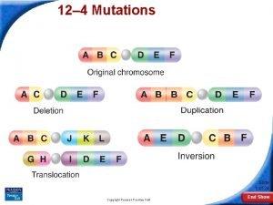 12 4 Mutations 12 4 Mutations Slide 1