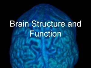 Brain Structure and Function If the human brain