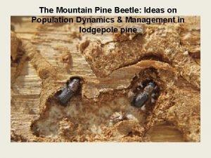 The Mountain Pine Beetle Ideas on Population Dynamics
