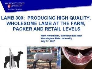 LAMB 300 PRODUCING HIGH QUALITY WHOLESOME LAMB AT