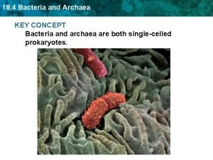 18 4 Bacteria and Archaea KEY CONCEPT Bacteria