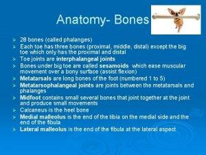 Anatomy Bones 28 bones called phalanges Each toe